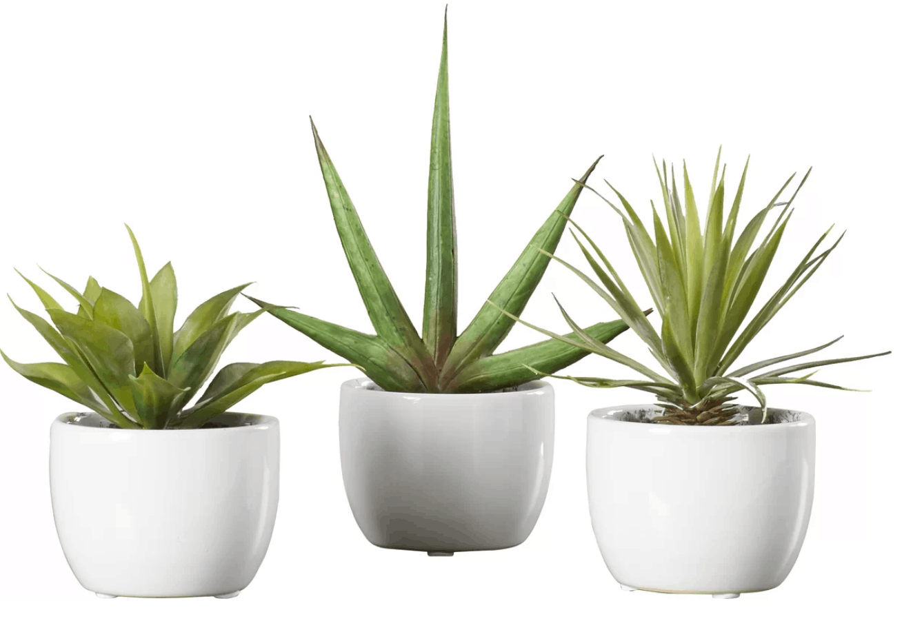 set of succulents joss and main.PNG